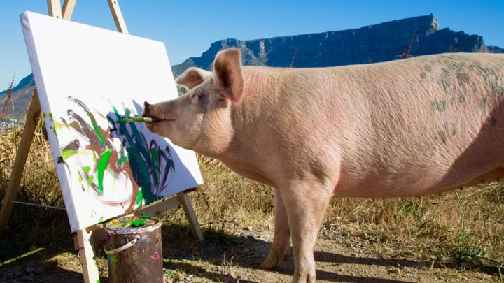 pig-saved-from-slaughter-becomes